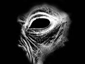 Space Orc Zbrush-leathery-gorilla-eye.jpg