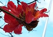 leica y pol-flor-1000669.jpg