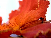 leica y pol-flor-1000673.jpg