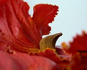 leica y pol-flor-1000677.jpg