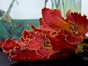 leica y pol-flor-1000690.jpg