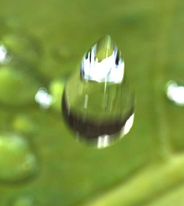 Rain drops - Gotas de lluvia-gotas-de-lluviagotas-de-lluvia_6.jpg