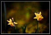 Objetivos Manuales,    que vicio   -img_8706_-flores-porst-09-03-2009-web2.jpg