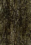 Necesito ayuda para poder incertar este arbol en otra escena-archmodels52_052.bark_diffuse.jpg