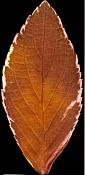 Necesito ayuda para poder incertar este arbol en otra escena-archmodels52_052_leaf.jpg