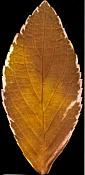 Necesito ayuda para poder incertar este arbol en otra escena-archmodels52_052_leaf_translucent.jpg