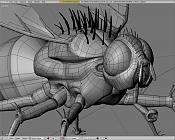 Insecto inventado-wire3.png