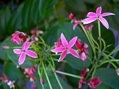 leica y pol-florecillas-1000017.jpg