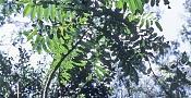alguien sabe este efecto     -blur-2.jpg