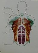 plantillas de musculos en internet -p2070004.jpg